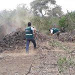 Lambayeque: Destruyen hornos ilegales donde quemaban algarrobo