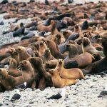 Elaborarán el primer Inventario Nacional del Patrimonio Natural del Perú