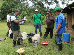 San Martín: Capacitan a agricultores en el manejo de plagas y enfermedades del cacao