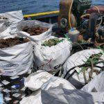 Rescatan 760 kilos de conchas de abanico frente a la Isla de San Lorenzo