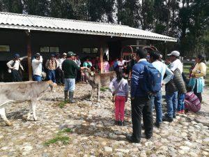 Huancavelica: Mejoran técnicas de producción de ganado