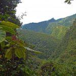 San Martín logró primera zonificación forestal a nivel nacional
