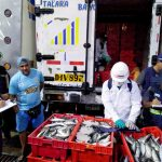 Piura: Decomisan 3.9 toneladas de caballa juvenil en terminal pesquero
