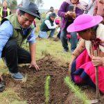 Junín: Más de 10 000 árboles plantados en campaña de forestación en Raquina