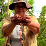 Tocache: Capacitarán a beneficiarios del proyecto cacao en educación financiera