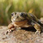 En solo cinco décadas pueden desaparecer una de cada tres especies de animales y plantas