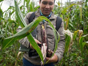 Acuerdan fortalecer desarrollo de la agricultura familiar en cinco regiones