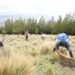 Junín: Instalan mil plantones en localidad de Cochas Chico