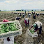 Minagri y productores forman alianza para garantizar alimentos