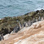 Moquegua: Conozca Punta Coles, una de las reservas más importantes del país