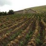 La diversidad de cultivos puede amortiguar los efectos del cambio climático