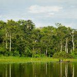 Lección a sacar de la pandemia es la de respetar a los bosques y su biodiversidad
