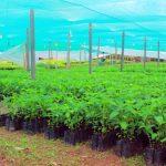 San Martín: Destinarán S/900 mil para reforestar 1000 hectáreas de suelos degradados