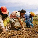Destacan importancia de la agricultura familiar en tiempos del coronavirus