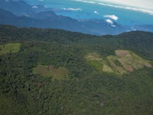 Brasil: La deforestación de un fragmento de Bosque Atlántico eleva la temperatura local