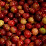 Loreto: Desarrollan nueva variedad de camu camu