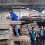 Decomisan 519 pies tablares de madera de origen ilegal
