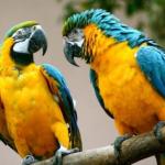 Conservar la vida silvestre permitirá salvaguardar la vida en el planeta