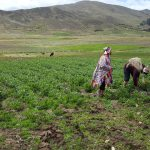 Cusco: Reconocen al Parque de la Papa como zona de agrobiodiversidad