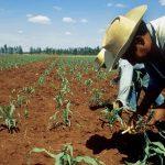 Dirección Regional de Agricultura San Martín cumple 51 años
