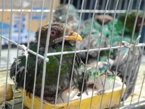 Fauna silvestre en la agenda de salud pública: diez propuestas