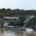 Piden coherencia a la ONU en defensa de los bosques