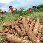 San Martín: Agricultores accederán a Seguro Agrícola Catastrófico