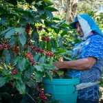 Junta Nacional de Café instaura protocolo para prevenir el Covid-19
