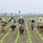 Financian iniciativa para prevenir crisis alimentaria debido al Covid-19
