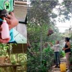 Loreto: Piden apoyo para alimentar animales víctimas de tráfico de fauna