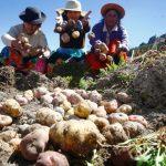 Destacan valor de la agricultura familiar para enfrentar la pandemia del Covid-19