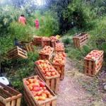 Ayacucho: Productores agrarios se ven amenazados por bloqueo de principales vías