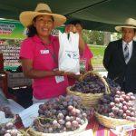 Tacna: Agricultores de Locumba incrementan producción de uva Red Globe