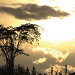 El Perú apuesta por un futuro sin emisiones de carbono