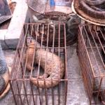 Cerrarían mercados de animales en Asia oriental luego del Covid-19
