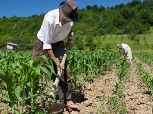 Invertirán USD 554 millones para la recuperación de la agricultura familiar