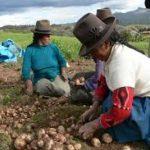 Agricultores piden reforzar acciones para reactivar al sector