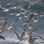 Proteger aves migratorias es un 'bioindicador' clave de la calidad de vida planetaria