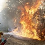 Incendios forestales en Australia se agravaron por tala de bosques nativos