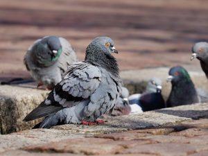España: Estudian comportamiento de la fauna ante el COVID-19