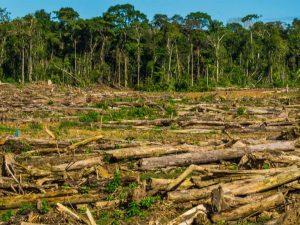 Se ha perdido 175 millones de hectáreas de bosque desde 1990