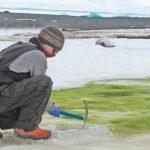 La 'crisis climática' verdecerá las costas de la Antártida