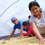 Destinan S/ 1.7 millones para mejorar la producción de cafés en Satipo