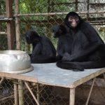 Divulgan procedimiento para que centros de cría de animales silvestres accedan a subsidio