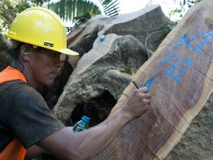 Implementarán sistema de información en línea para acreditar origen legal de la madera