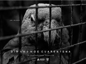Lanzan campaña contra el tráfico ilegal de fauna silvestre