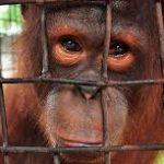 Plantean prohibición total del comercio de animales silvestres para evitar pandemias