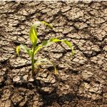 Resaltan importancia de nuevos estilos de vida para mitigar crisis climática