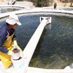 Aprueban norma sanitaria para prevenir enfermedades en peces