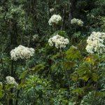 Día Mundial del Ambiente: Alarma la disminución de la biodiversidad